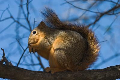 The squirrel exhibit was surprisingly popular