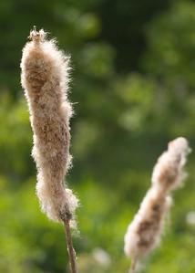 Originally horrified, we had to explain to Nori that these weren't dog tails on sticks