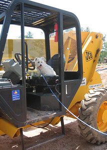 When the construction workers leave for the weekend - Nori likes to try out the machinery