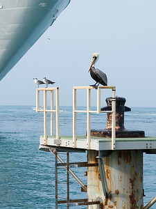 Key West birdie