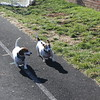 "daisy and birdie egloff<br /> ""Dog Gone it"" looks like birdie wins race"