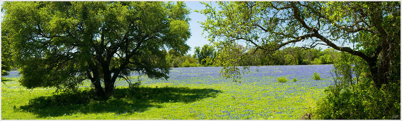 """Fields of Blue"" The Texas state flower blankets the Hill Country far and wide during their annual bloomfest. Wildflowers can literally cover thousands of square miles of open fields across the state, matched in their density and diversity by the clicking throngs of avid nature photographers. For more information, visit:"