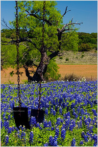 """Schoolyard Blues"" A playground swing hangs motionless outside a long-closed school house in the Hill Country of Texas. Now, knee-deep bluebonnets have claimed the abandoned grounds for a more peaceful purpose."