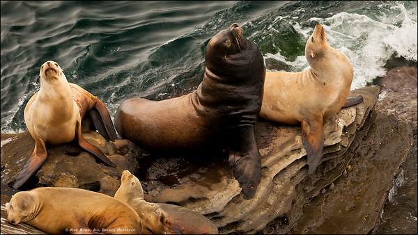 """Pass the Coppertone please."" Scenes from around La Jolla, California. Sea Lion Vogue - Strike A Pose."