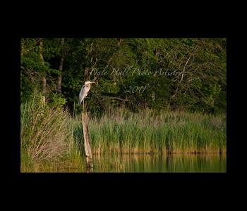 Prices Creek Heron on pole