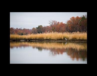 Prices Creek Fall foliage and Heron walk