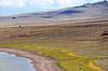 Prima_T_Petroglyph_Lake_Hart_Mtn_Refuge_DSC_9854