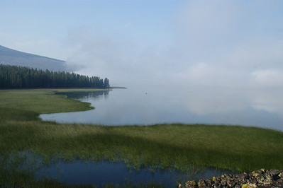 Davis Lake, Central Cascades Or Morning Fog bank hanging over the lake The foreground reeds are 5 feet tall.