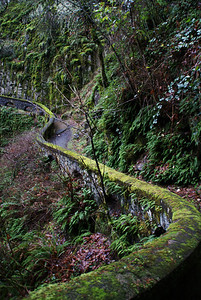 Trail to Sheppard Dell Waterfall.  Columbia River Gorge, Oregon