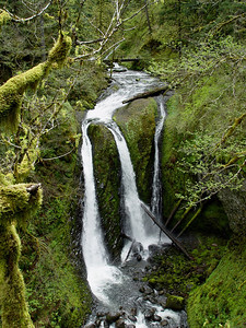 Triple Falls, Horse Tail Falls Trail.  Oregon