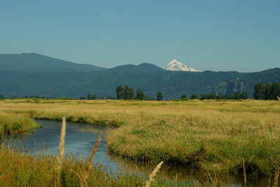 Mt Hood from the wildlife refuge just off of Hwy 14.   Notice the Vista house off to the right....