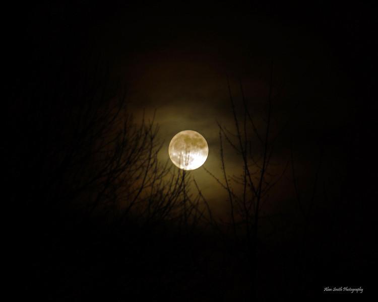 Moon in Tualatin Oregon