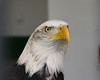 I love Eagles...