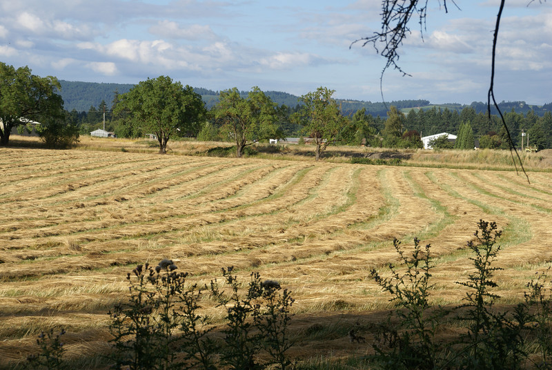 Mowed hay field....Yamhill County