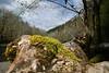 Wilson River...mossy log