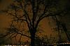Oak tree from Skyline Blvd by VA Hospital   Portland Or