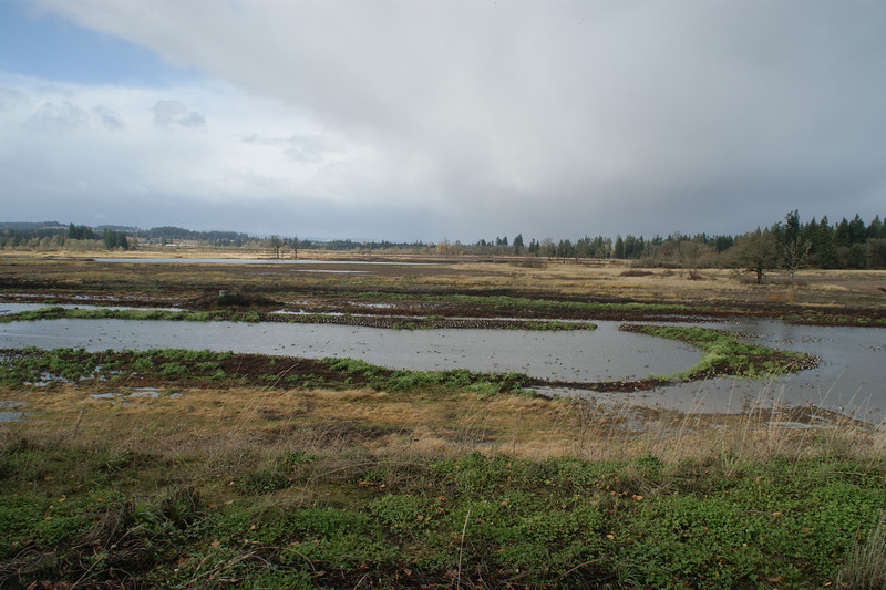 Tualatin Wildlife Refuge