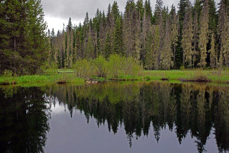 Refelctions - Little Crater Lake, Mt Hood Nat Forest, OR