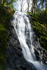 Waterfall from creek running into Wilson River, Oregon