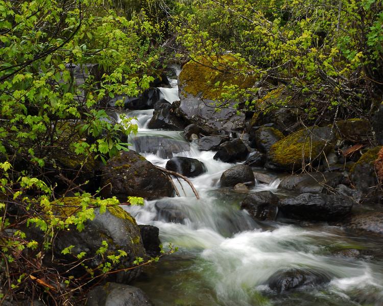 Mountain stream on Timothy lake road