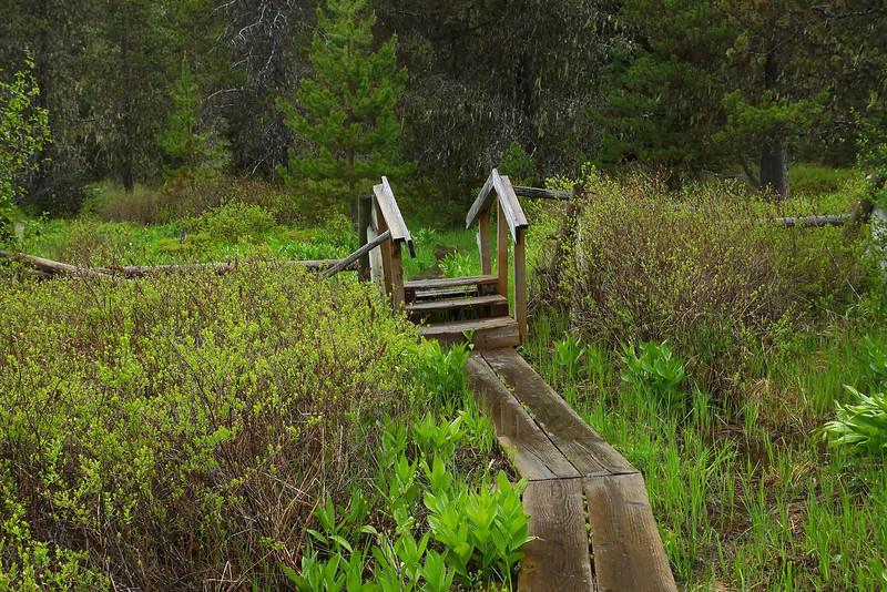 Little Crater Lake - board walk in meadow