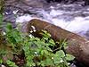 Wahkeena Creek, Columbia River Gorge, Oregon
