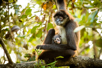 I was filming in Belize - Mum and baby spider monkey. I could have watched them all day... #EarthOnLocation #BBCEarth #Wildlife #Monkey #Belize