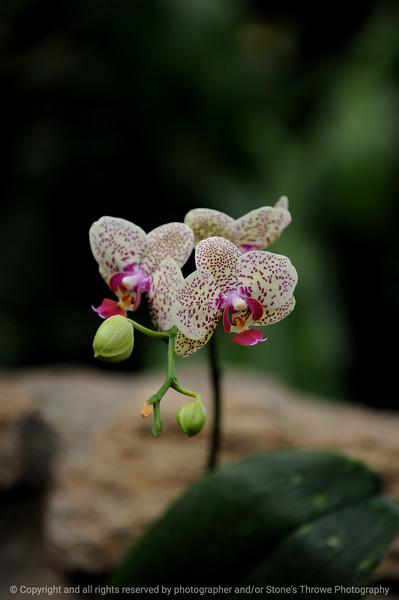 015-flower-dsm-14jan09-1187
