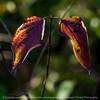 015-leaf-wdsm-14nov16-006-2418