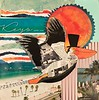 Pelican_Collage