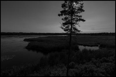 Whitlock's Pond