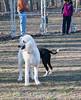 dog park-lg (2 of 7)