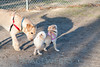 dog park-lg (6 of 7)