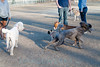 dog park-lg (4 of 7)