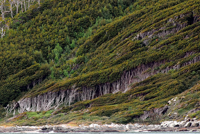 Straits of Magellan...so windy, a dominate westerly wind that the trees are all bent to the east