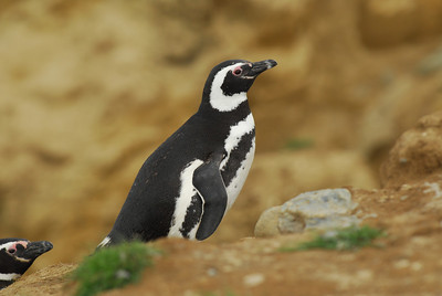 Article & Photo Highlights of Antarctica & South America Cruise