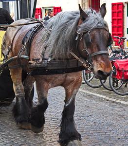 Brugge, Belgium draft horse