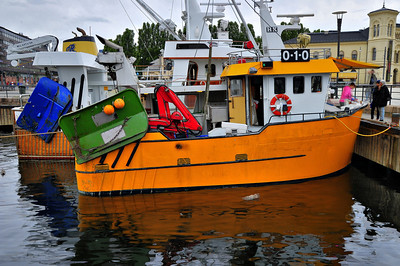 HDR photo of the yellow shrimper