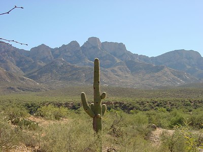 Another view of the Santa Catalinas, featuring a lone Saguaro cactus.
