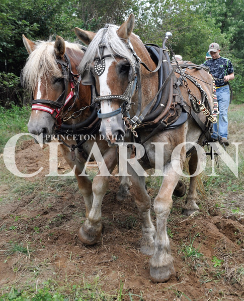 Daily Clarion/Andrea Howe<br /> Drew Ice drives his grandpa Mike Ice's Belgian mares as they plow a patch of ground at Lyles Station Saturday afternoon, demonstrating early farming methods at the New Beginnings Celebration. The event included barbecue, pumpkin painting, a corn maze, petting zoo and bounce house for children. The corn maze is open weekends in October. See more photos, page 6A.
