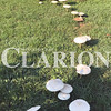 "Daily Clarion/Andrea Howe <br /> Sue Bruck's Taftown Road lawn features a ""fairy ring"" of wild mushrooms, some the size of salad plates. The ring popped up and has survived a few forays by her pets."
