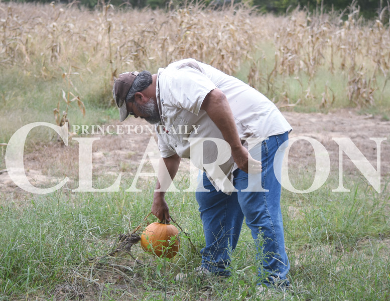 Quiche Matchen/ Daily Clarion<br /> Gary Schmidt picks a pumpkin near Lyles Station's corn maze that kicks off Friday and continue every weekend in October. Schmidt and Stanley Madison, chairman and founder of Lyles Station Historic Preservation Corp., work out the last few details of the corn maze Wednesday evening.