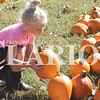 Quiche Matchen/ Daily Clarion<br /> Braylynn Noble, 5, picks out a pumpkin to paint at Lyles Station's annual corn maze Saturday afternoon. Noble helped her grandmother Dawn Opipari of Tim's Awesome BBQ, who volunteered at the event.