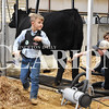 Sarah Loesch/Daily Clarion Lawson Eastridge, 5, makes his way to the other side of his family's Angus cow to continue preparation for her showing at the Gibson County Beef Preview Show.
