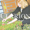 Daily Clarion archive/Andrea Howe <br /> Gibson County Chamber of Commerce Executive Director Karen Thompson checks one of the tags on azalea plants delivered to the chamber's workshop storage building prior to the annual azalea sale.