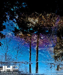 """High Park Abstraction, #1"", Toronto, ON, Canada, 2011 Print JP11-218-036"
