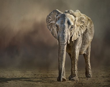 Altered Reality  Advancing (African Elephant) by Nikki McDonald  First Place