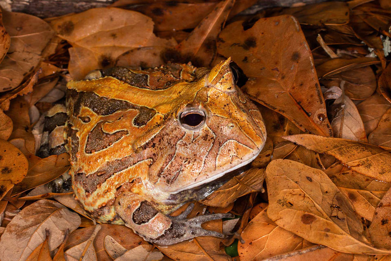 Camouflage Frog - Donna Turner - Third Place