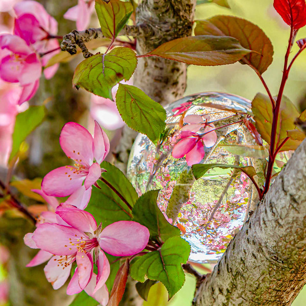 Pink Blossom Reflection - Donna Turner - Honorable Mention