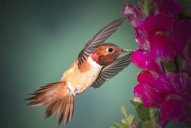 Pictorial  Hummingbird by Donna Turner  Honorable Mention